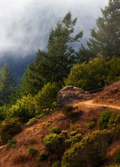 Mt. Tamalpais State Park in Mill Valley, California has redwood groves and oak woodlands with a spectacular view from the 2,571-foot peak.