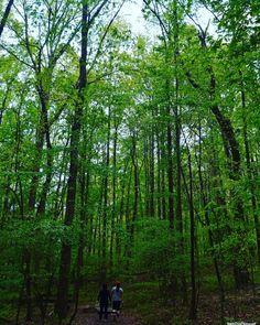 #Trails #naturetrail #outdoors #goodtimes #relax #nature_perfection #nature_captures #nature #igworld_nature_  #whitedeerphotograph #color_perfection #landscape #reflection #bluesky #hot_shotz #bestshotz_sky #miami_living #best_of_miami #splendid_nature #naturelovers #mothernature #tropical #travel #naturelovers #landscape_lovers #landscape_captures #landscapephotography #nature_brilliance http://tipsrazzi.com/ipost/1508322363204045032/?code=BTuozKpjgjo