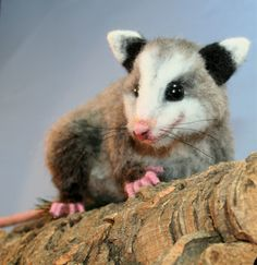 Life Size Baby Opossum OOAK Needle felted by Bear Artist by SteviT