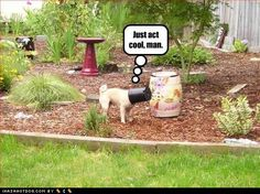how can you act cool when you got a bucket on your head? Funny Animal Photos, Funny Animals, Funny Pictures, Cute Animals, Creature Feature, Have A Laugh, Pug Life, The Funny, Make Me Smile