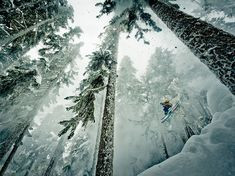 Picture of a man skiing in the woods