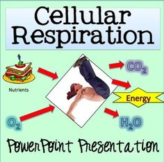 Definition Cellular Respiration In Plants Kid Friendly