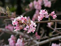 Winter-flowering plants: 10 of the best Add a bright splash of colour to gloomy January gardens with Jane Perrone's pick of the 10 best winter-flowering plants