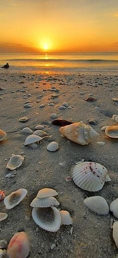 Sunset Beach Shells - http://universal-wellness.blogspot.com/2015/02/baring-my-soul-and-planting-dream.html