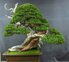 Bonsai Bark | Promoting and Expanding the Bonsai Universe. You cannot do any better for bonsai information and learning then this one!
