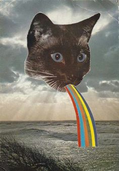 Cat throwing up rainbow
