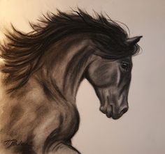 Horse ~ Pencil Drawing