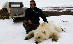 Pizzly or grolar bear: hybrid species is result of climate change by Supertrooper http://focusingonwildlife.com/news/pizzly-or-grolar-bear-hybrid-species-is-result-of-climate-change/