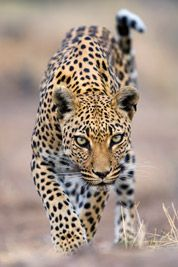 Wildlife Nature Photography Awards / Wildlife Nature Photography by Stephen Belcher