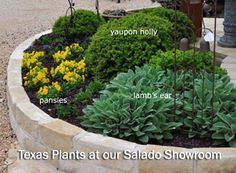Central Texas Gardens as seen in Texas Gardener Magazine Oversized Pots and Planters for Texas Gardens - Spring Gardens - Gardening with Native Texas Plants