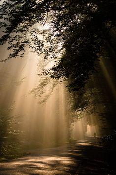 Nationaal Park Hoge #Veluwe, #Nederland