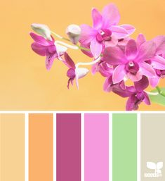 Flora Hues - http://design-seeds.com/index.php/home/entry/flora-hues22
