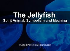 What does the Jellyfish spirit animal really mean? Find out the true meaning and symbolism of the Jellyfish in this special spirit animal analysis. Jellyfish Sting, Pet Jellyfish, Jellyfish Drawing, Jellyfish Painting, Jellyfish Tattoo, Jellyfish Light, Jellyfish Costume Diy, Jellyfish Quotes, Spirituality