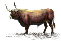 Aurochs | AUROCHS - Les animaux du monde | extinct by 1627