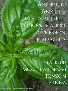 Basil Essential Oil Benefits Clears the sinuses, promotes digestion and stimulates circulation, especially in the respiratory system  Relaxes and soothes nervous depression, fatigue, anxiety and hysteria; excellent for nervousness.  Basil Essential Oil is a natural muscle relaxer.   Improves concentration  Regulates menstrual cycle