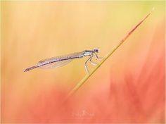 Quand la nature est sublimée par notre optique 60mm 1:2.8 MACRO. Splendide moment de poésie capturé par Stefan Stark. Partagez vous aussi vos photos avec le hashtag #MyOLympus ! Photo : Stefan Stark / #OlympusOMD E-M1 / M.ZUIKO DIGITAL ED 60mm 1:2.8 Macro #Olympus #Zuiko #nature #naturephotography #zoom #macro #insecte #flower #bug #shotoftheday #picoftheday #OMDRevolution via Olympus on Instagram - #photographer #photography #photo #instapic #instagram #photofreak #photolover #nikon #canon…