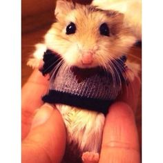 Knitting Pattern For Hamster Jumper : 1000+ images about Best Dressed Pets! on Pinterest Dog costumes, Chihuahuas...