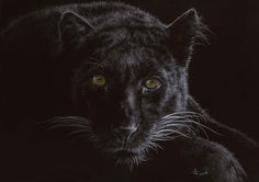 Black Velvet by Vic Bearcroft