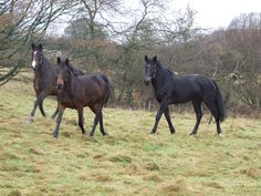 From wild and unbroken to riding and friendly in just six weeks in my role as a horse whisperer