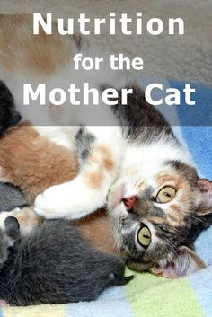 Nutrition for the mother cat