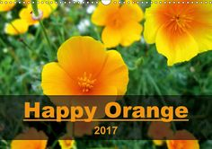 Bright orange flowers make even a rainy day full of sunshine. Cheer yourself up with these pictures of orange floral beauties!