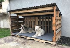 Look at the eye-catching pallet dog house idea that is all finished out with the. Look at the eye-catching pallet dog house idea that is all finished out with the rustic pallet wood Goat Shelter, Shelter Dogs, Pallet Dog House, Dog House From Pallets, Pallet Dog Beds, Wood Dog House, Doggy House, Goat House, Build A Dog House
