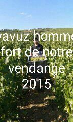 Débardage à Cumieres 1er Cru France Champagne Gabriel Boutet