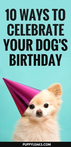 If your dog's birthday is coming up and you're not sure how to celebrate don't worry, I've got you covered. From hosting your own dog party to having a movie night with your dog, here's 10 fun ways to celebrate your dog's birthday. #dogs #puppies #dogtips #dogcare via @puppyleaks
