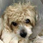 PEEWEE  – A1083434.  IN FOSTER NYCACC
