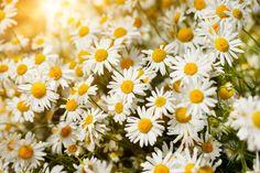 A terapia floral pode ser a alternativa certa para o seu tratamento. Cultive plantas medicinais em sua casa e conheça o poder da natureza. http://www.eusemfronteiras.com.br/plantas-medicinais-para-cultivar-em-casa-2/?utm_content=buffer24256&utm_medium=social&utm_source=facebook.com&utm_campaign=buffer #eusemfronteiras #plantas #medicinais #cultivo #casa