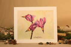 """Shooting Stars Graceful Watercolor Painting Giclee PRINT of delicate pink wildflowers, nature artwork from Montana by Christy Sheeler on Etsy.  8"""" x 10"""" dimensions.  https://www.etsy.com/listing/294643053/shooting-stars-graceful-watercolor"""