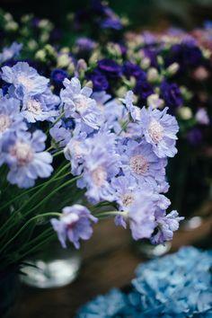 - Flower Potluck La Rosa Canina