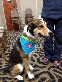 """One of the 404 Veterinary Emergency & Referral Clinic's """"Hero in Fur"""" Blood Donors!! I Saved A Life !!  www.facebook.com/wagzwear Dog Id, Your Style, Corgi, Blood, Hero, Facebook, How To Wear, Life, Products"""