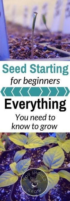 Seed starting for beginners: Everything you need to know to grow!