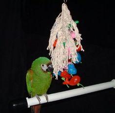 Parrot African Amazon Parrots Junior. http://tabletpromo.org/viewdetail.php?asin=B003RAKMMG