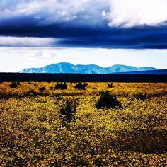 #landscape #nature #flower #mountain #sky #newmexico #newmexicotrue #serenity #purenm #photowalk #photodaily #photography #photooftheday #picoftheday #travel #trip #travelzoo #transfer_visions_nm #l4l #like4like #love #local #follow #followme #follow4like #followforfollow