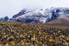 Parque nacional natural los nevados Mountains, Natural, Travel, National Parks, Viajes, Destinations, Traveling, Trips, Nature