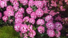 #beautyful #pink