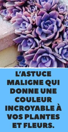 L'astuce maligne qui donne une couleur incroyable à vos plantes et fleurs. The Effective Pictures We Offer You About Cactus plants A quality picture can tell you many things.