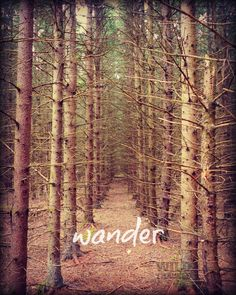 Forest Photography, Nature Art Print, Brown Tree Wall Art, Inspirational Quote, Wanderlust Art, Typography Print, Rustic Home Decor by WildTravels on Etsy https://www.etsy.com/listing/188509711/forest-photography-nature-art-print