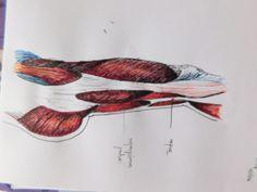 Study Watercolor Tattoo, My Arts, Study, Tattoos, Studio, Tatuajes, Tattoo, Watercolour Tattoos, Watercolor Tattoos