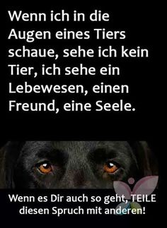 Die Augen – Community – Google+ Animals And Pets, Funny Animals, Cute Animals, Pet Dogs, Dog Cat, Amor Animal, Rainbow Bridge, Dog Quotes, Animal Rights
