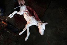 Die 872 Besten Bilder Von Tiefe Gedanken Animal Rescue Animaux