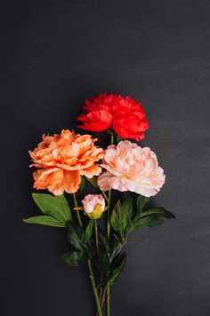Flowers on a black background.