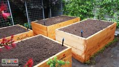 Self-Watering Wicking Beds - Leaf, Root & Fruit Gardening Services Wicking Garden Bed, Wicking Beds, Fruit Garden, Edible Garden, Growing Sweet Potatoes, Growing Raspberries, Garden In The Woods, Self Watering, Grow Your Own Food