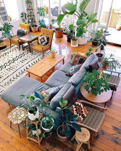 Invite plants to your living room