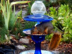 even the squirrels like the totem bird feeders! (mine)
