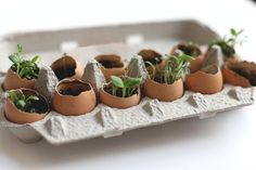 I'm obsessed with this brilliant idea: an Egg Crate Garden for Spring! This is a sweet project to do with kids, yet a unique & beautiful home decor focal point | From: Free People {BLDG 25}