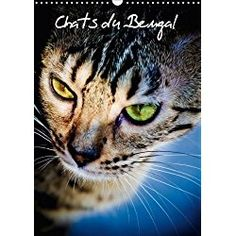 Bengal Calendars 2018 Great Gifts For Cat Lovers Cat Day Cats Cat Calendar