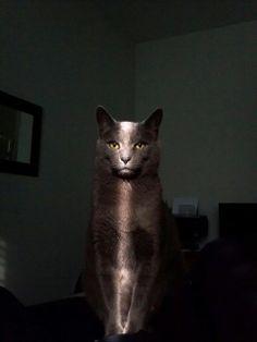 Todos os gatos gostam de ser o centro das atenções - Peter Gray #Gatos #fotografia #atencioso